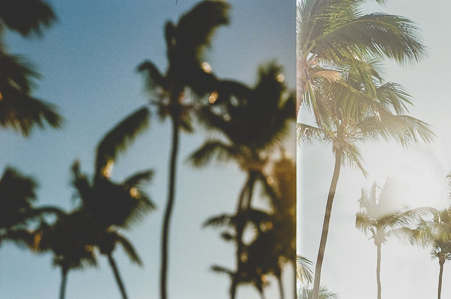 Palms on Blurry Palms
